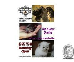 cats available with us