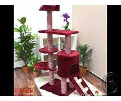Cat tree for sale with scratch board