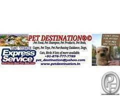 All breeds and pet products available at pet destination