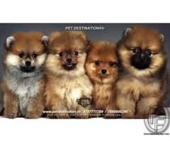 PET DESTINATION-the brand u can trust upon 7666666299