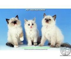 10 Reasons Why Kittens Are Fantastic BY PET DESTINATION 8767777789