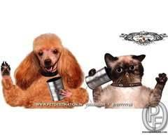 All type of dog cat available call 7666666299