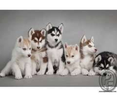 Dog available | Pet shop for dogs